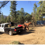 California Club Assists Animal Rescue Group with Communication Support